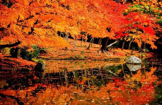 「紅葉狩り」の画像検索結果